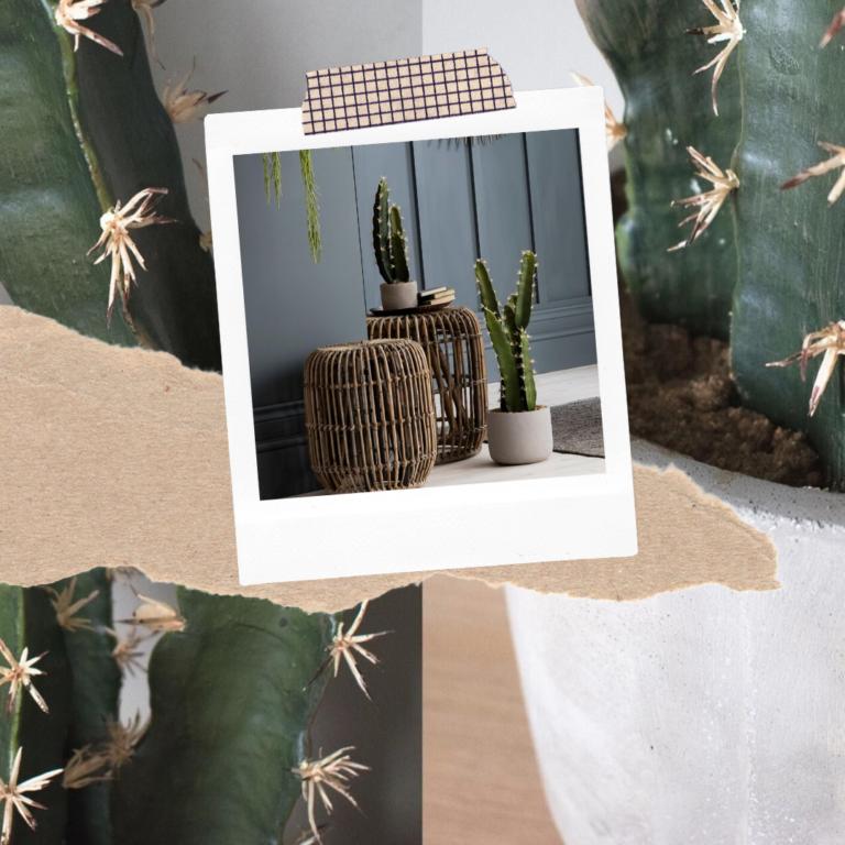 Faux Cactus in Concrete-Effect Pot, Large Set of Two