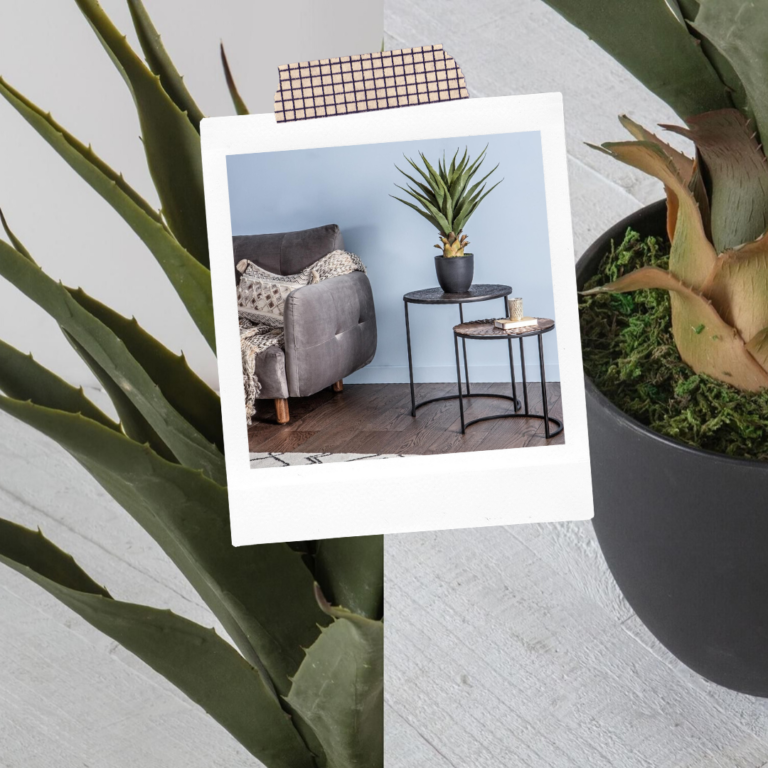 Faux Large Agave